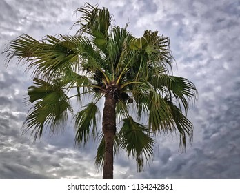 Low Angle View of Palm Tree Against Cloudy Sky