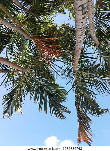 Low angle view of palm tree's