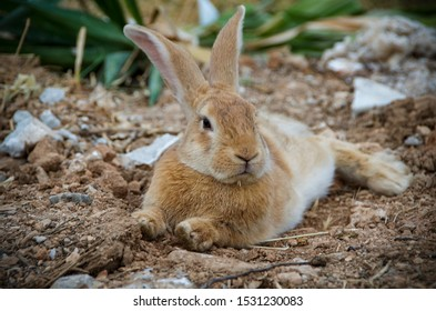 Low angle view of a really pretty and cute bunny rabbit with big ears