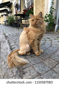 Low angle view of red cat with shaved fur sitting on pavement watching outside restaurant.