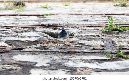 Low angle view shallow depth of field image of a pigeon and its home at a medieval masonry wall at Suleymaniye, Istanbul
