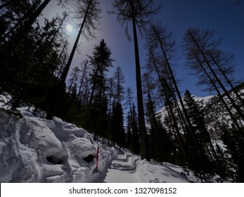 Low angle view of snowy footpath in a larch forest against the moonlit sky