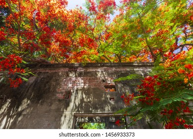 Low angle View of the sunlight shadows through Phoenix Flower upon the house in Tsaoshan Moonscape Scenic Area,Taiwan