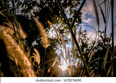 Low angle view of sunset with flower grass at field