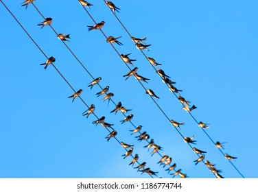 Low Angle View of Swallows on Wire against Blue Sky,