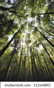 Low angle view of tall trees