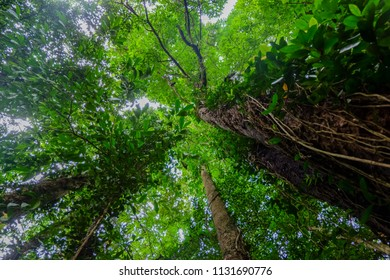 low angle view of tree in rainforest