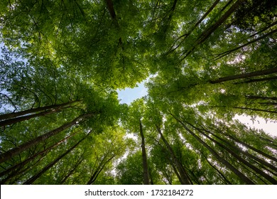 Low angle view of trees in the forest