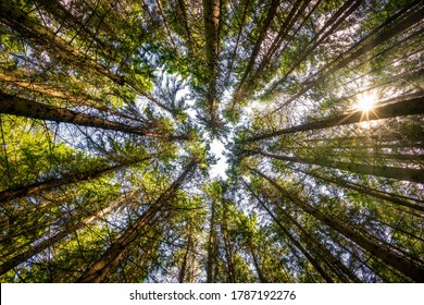 Low angle view of trees in the forest, natural background