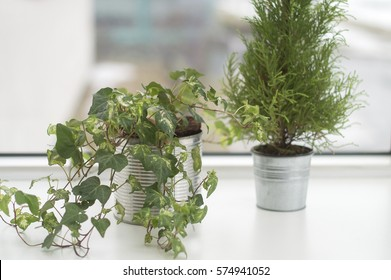 Low angle view with white and milky windowsill with a hedera and cypress in flower pots. Neat and fresh interior design. Distant city silhouettes in the background.