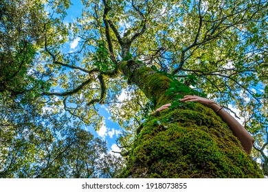 Low angle view of woman's hands hugging moss covered tree trunk