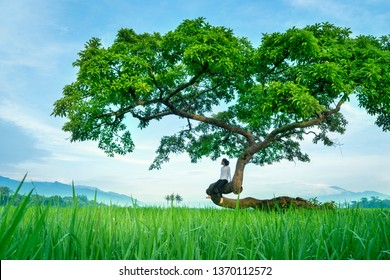 Low angle view of a young woman relaxing on the tree while enjoying rice field view