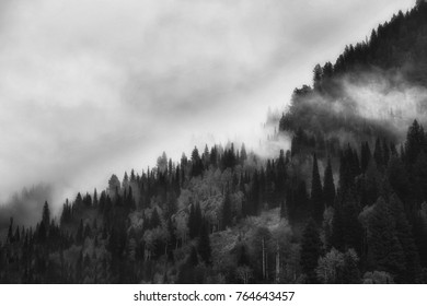 Low clouds and sun light drift through the trees in the Wastach mountains in Utah.