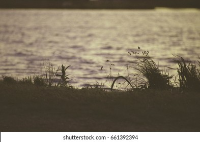 Low contrast analog photo of grass near a river on a summer evening