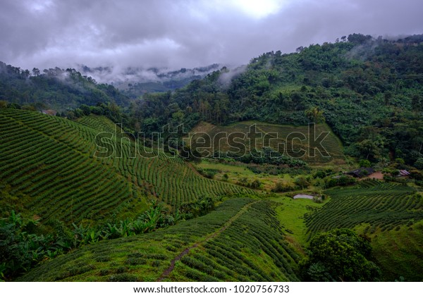 Low dark clouds in the north mountains of Thailand.
