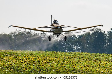 Low flying airplane spraying a field of sunflowers