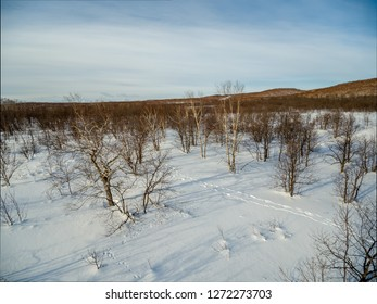 Low height aerial view at winter forest