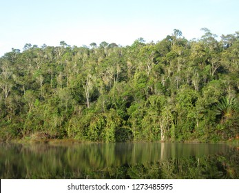 Low hills covered with dense jungle with reflection in small lake during early morning near Andasibe-Mantadia National Park (Perinet), Madagascar