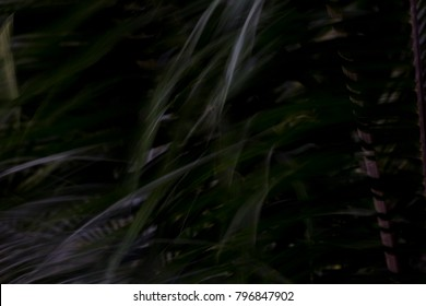 Low key close up nypoideae leaves. Abstract Waving of nipa leaves with low key style background.