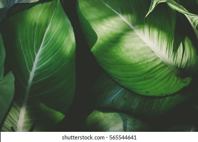 Low key green leafs dark nature background