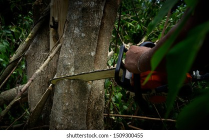 Low key picture of chainsaw cutting the tree. Close-up of woodcutter sawing chain saw in motion,sawdust fly to sides. Concept deforestation, global warming,preserve the environment.human damage forest