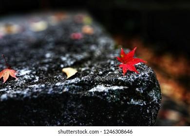 Maple-key Images, Stock Photos & Vectors   Shutterstock
