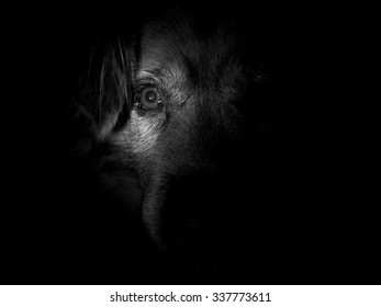 Low Key Shot of Dog with Half Face Visible