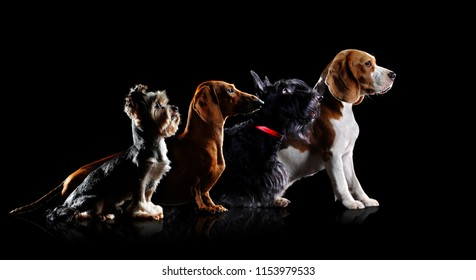 Low key silhouette of different breeds dogs