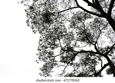 low key treetop isolated on white