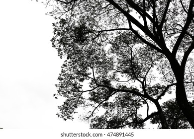 low key treetop  isolated on white background