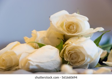 low key vintage style in natural lighting and shadow of blur white roses and rose petals on bed decorated for special period. Romantic set up for Valentine Day,Honeymoon,Wedding Anniversary