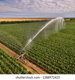 Low level aerial view of crops being spray irrigated