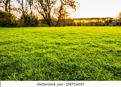 Low level image of a well-painted, lush lawn seen in a large garden, just before sunset. This HDR image shows the fine detail of the grass, near lens of the camera.
