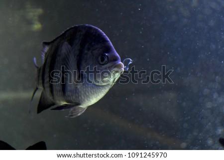 Low Lit Fish Aquarium Tank Air Stock Photo Edit Now 1091245970