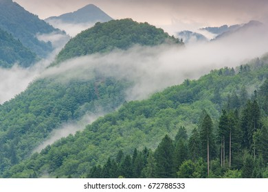 low lying cloud with the evergreen conifers shrouded in mist in a scenic landscape