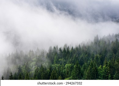 Low lying cloud over evergreen forests clinging to the sides of the mountain in an atmospheric nature background