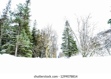 Low perspective on a snowy forest in Norway