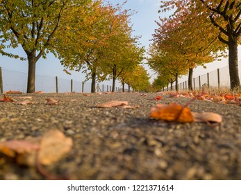 Low point of view in an alley in autumn park with colorful foliage