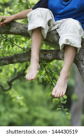 Low section of little boy sitting on tree branch