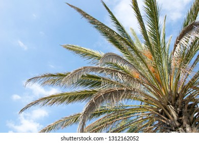 a low shot of a palm tree during a sunny day