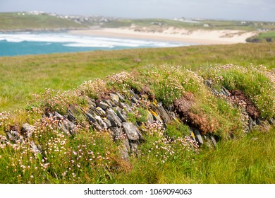 Low stone wall covered in grass and thrift flowers on West Pentire Head near Newquay in Cornwall, UK