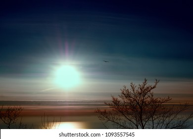 Low sun (mid winter day, winter solstice) over winter Mediterranean sea with sunny glade and bird