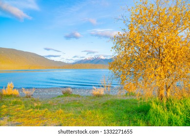 Low sun on bright blue water of Lake Te Anau and catches the yellow hills and kowhai flowers