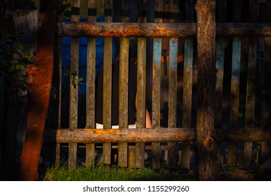 low sunshine on a wooden fence and grass