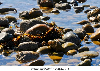 Low tide with rocks and kelp in the tide pool at San Mateo Creek, Southern California