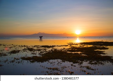 low tide shows the green water plants in a yellow orange light at the golden hour, a tranquil nature photography with one person walking in the shallow water