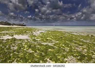 Low tide in Zanzibar