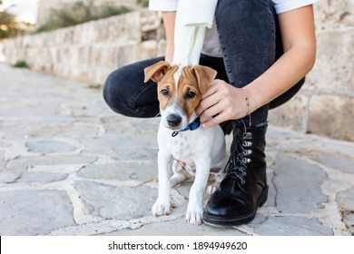 low view of an anonymous woman walking a jack russell dog outside in street