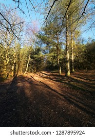 The low winter sun casts long shadows where woodland paths cross on a bright clear morning