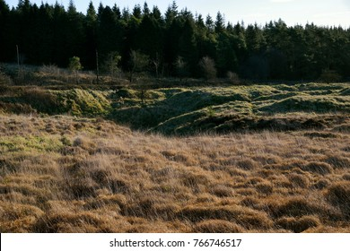 Low Winter Sun catches distrubed ground at Priddy Mineries, Mendip Hills, Somerset